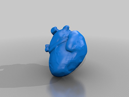 3D Printed Anatomical Models > ENGINEERING com