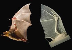 Bat, Brown, transducer, flight, airforce, aircraft, design