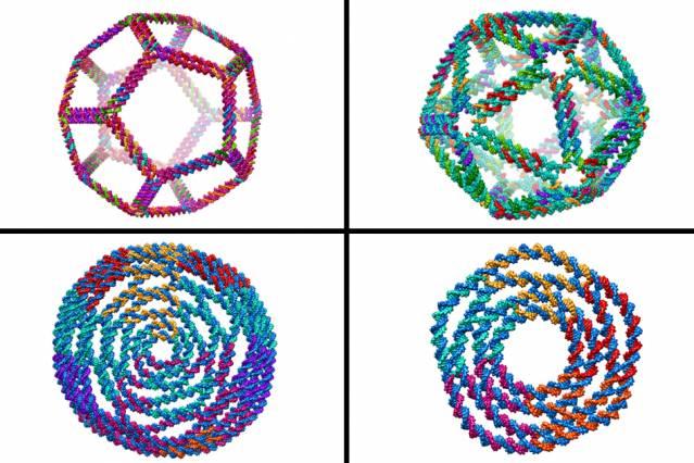 3D printing, DNA, genetics, amino acids