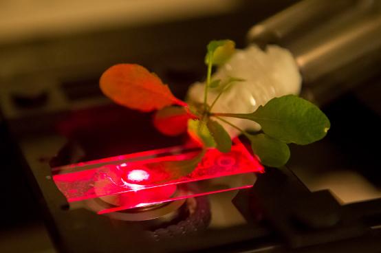 plant, biology, nano, nanoparticles, sensor, bomb,