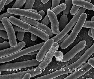 bacteria, nuclear waste,