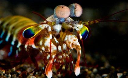 mantis shrimp, biomimicry, medicine, cancer