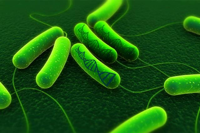 Engineers Develop Bacteria-Based Information Storage