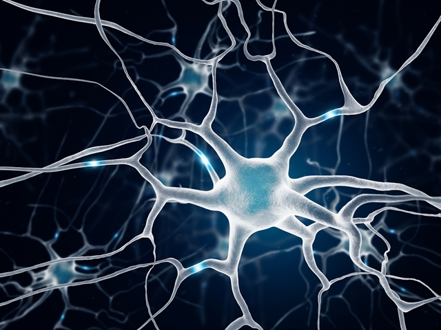 essay on neurones Based on morphological characteristics, the neurons have been classified into the following groups: multipolar, bipolar, pseudo-unipolar, and unipolar.